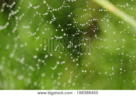 A spiderweb covered in water drops with shallow depth of field