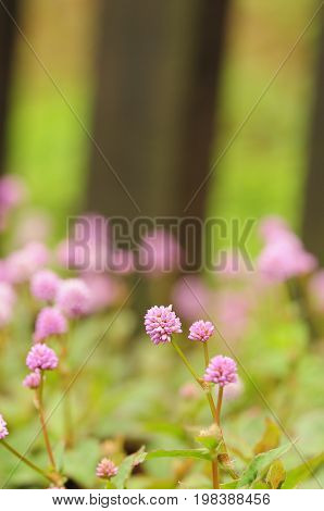 Small purple flowers in a garden with shallow depth of field