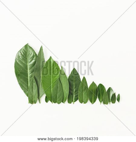 Forest treeline made of green leaves on white background. Flat lay. Top view. Minimal nature concept.