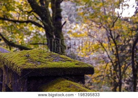An old mossy bridge in a forest.