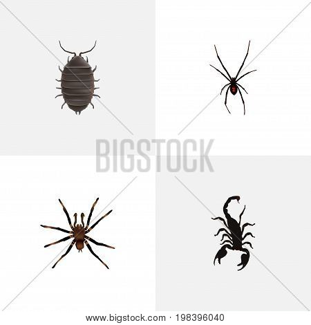 Realistic Spinner, Dor, Arachnid And Other Vector Elements