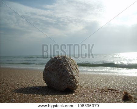 Beach and single sea shell on a beautiful Gambian seashore with gentle ocean waves