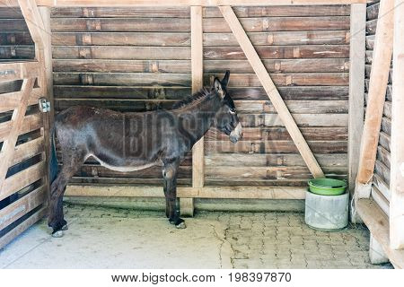 brown donkey standing inside his stable while it is summer