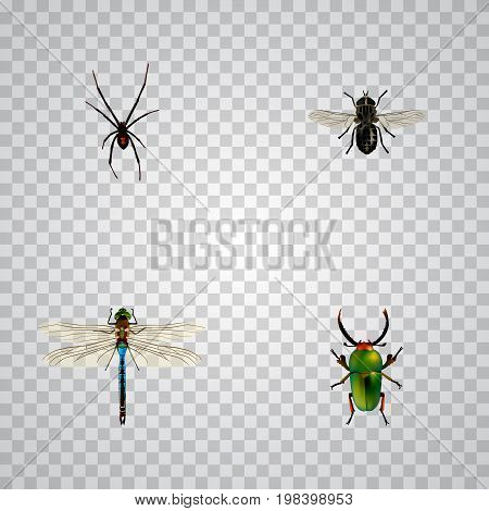 Realistic Spinner, Insect, Midge And Other Vector Elements