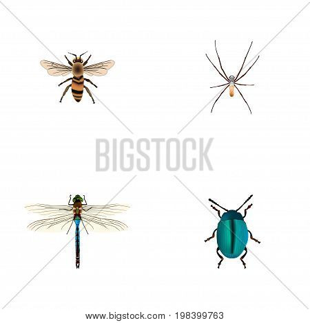 Realistic Bug, Damselfly, Spider And Other Vector Elements