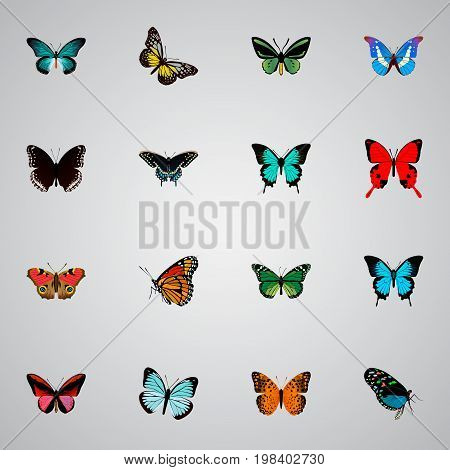 Realistic Hairstreak, Summer Insect, Copper And Other Vector Elements