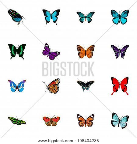 Realistic Papilio Ulysses, Sangaris, Morpho Hecuba And Other Vector Elements