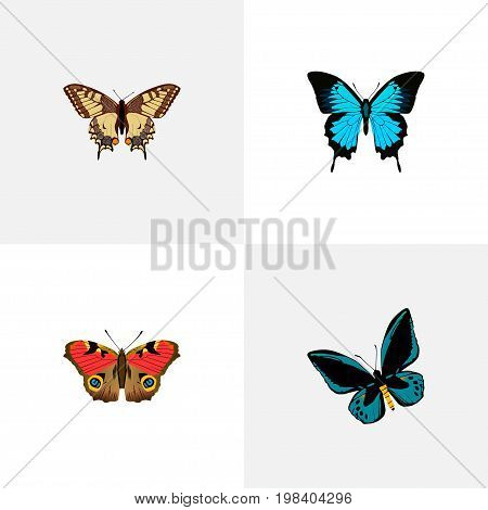 Realistic American Painted Lady, Demophoon, Papilio Ulysses And Other Vector Elements