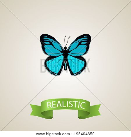 Realistic Papilio Ulysses Element. Vector Illustration Of Realistic Sky Animal Isolated On Clean Background