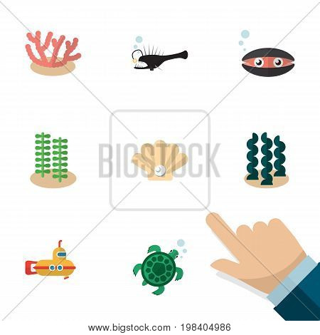 Flat Icon Sea Set Of Seaweed, Alga, Tortoise And Other Vector Objects