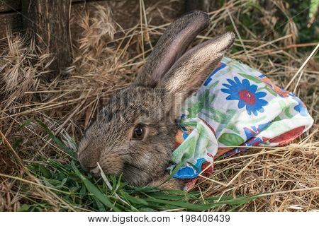 Rabbit in a close-up dress in straw