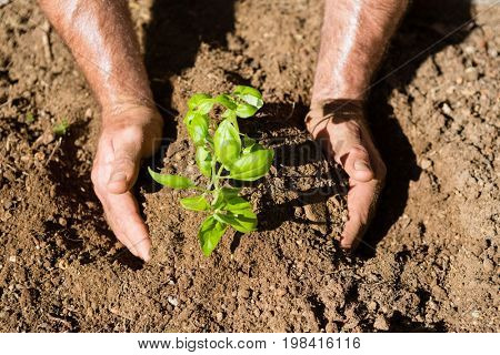 Close-up of man planting sapling in garden on a sunny day