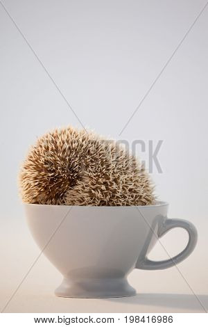 Close-up of porcupine in cup against white background