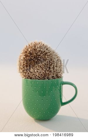 Close-up of porcupine in mug against white background