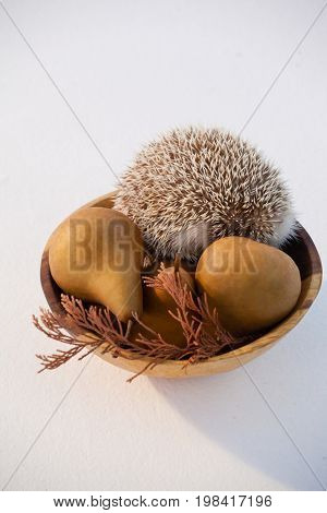 Pears fruit and porcupine in bowl against white background
