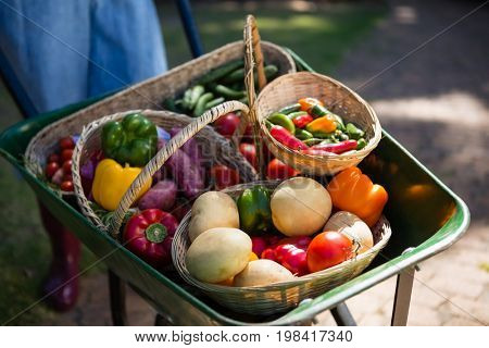 Close-up of various fresh vegetables in wheelbarrow