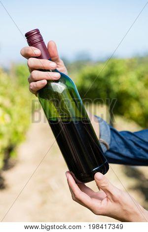 Female vintner holding wine bottle in vineyard