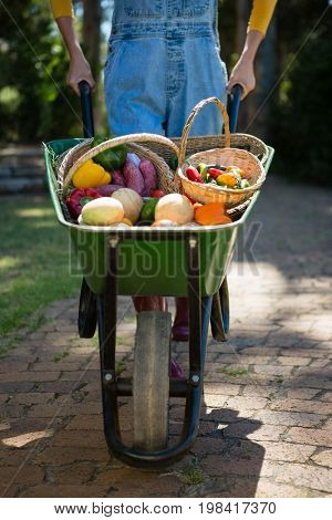 Mid section of woman holding fresh vegetables in wheelbarrow