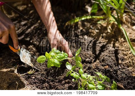 Woman planting sapling in garden on a sunny day