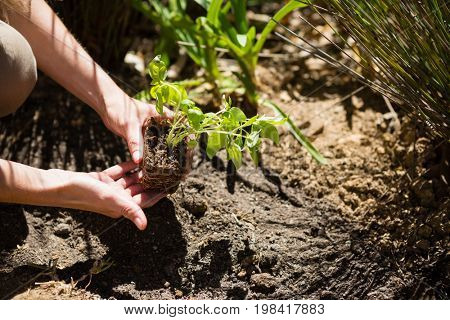 Mid section of woman planting sapling in garden on a sunny day