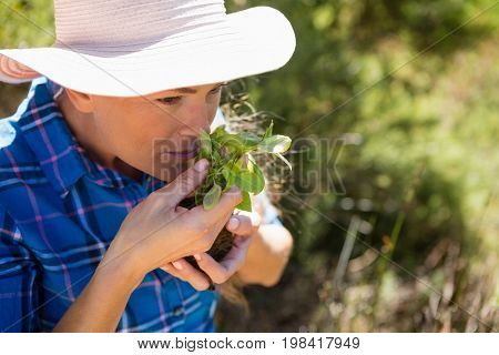 Woman smelling sapling in garden on a sunny day