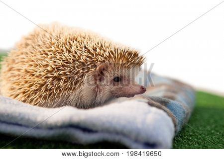Close-up of porcupine on towel