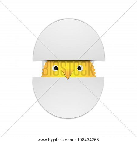 Vector illustration yellow chick peeking out of two halves of a shell on a white background.