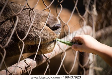 Man feeds the animal behind the fence at the zoo .