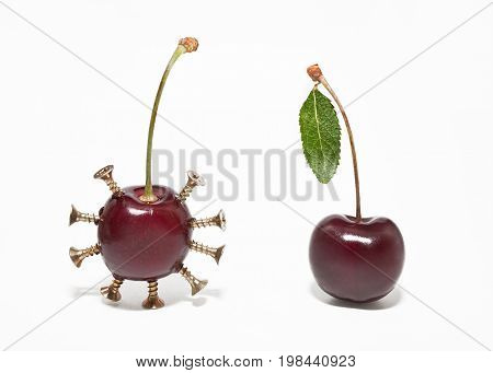 Genetically modified food products. Two cherries on a white background.