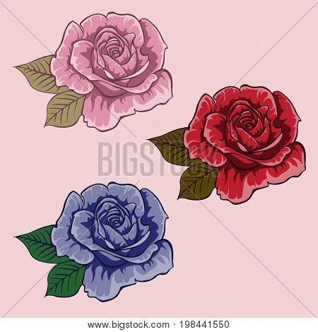 Set of flowers. Set of roses. Red rose. Blue rose. Pink rose. Isolated flowers on light background