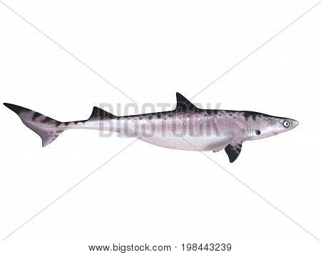 3D Render Of A Shark Inside A White Stage