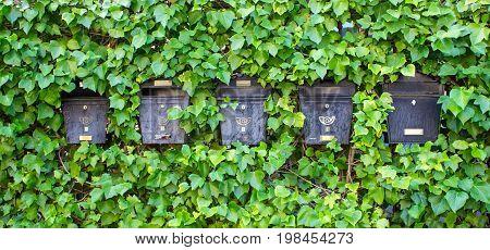 Mailboxes. Green plant wall. Salamanca city, Spain.