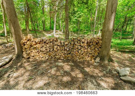 beautiful closeup view of a fire woods neatly packed between the trees in woods, prepared for camp fire and barbecue