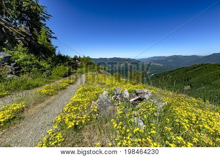 Beautiful Fir Trees On A Background Of Green Mountains Grand Park, Mount Rainier