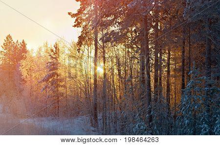 Winter snowdrift landscape. Winter  snowflake  background scene