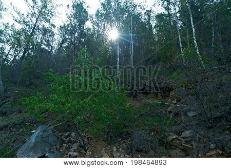 Coast Forest Lake Baikal . Buryatia  Buryatia summer