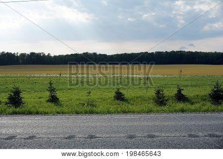 Potatoes are grown on a potato farm along Highway 131, near Alba, Michigan.