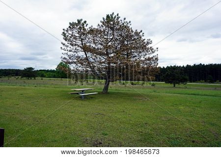 At the Tustin Rest Area and Scenic Overlook, on U.S. Highway 131, in Tustin, Michigan, travelers may sit at a picnic table under the shade of a pine tree.