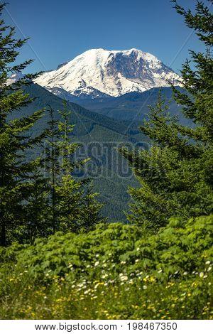 Mt. Rainier Washington State Park Views Of The Peak Through The Foliage
