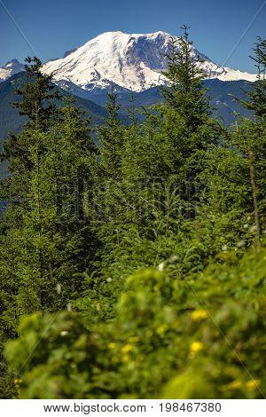 Mt. Rainier Washington State Park Views Of The Peak