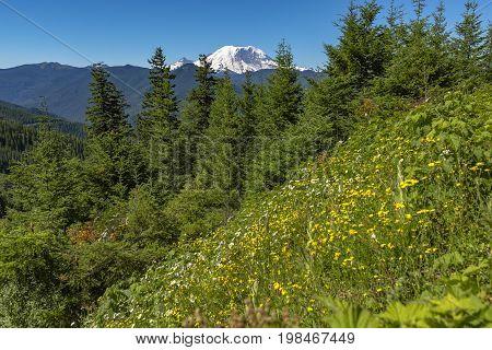 Mt. Rainier Washington State Park With Green Vegetation
