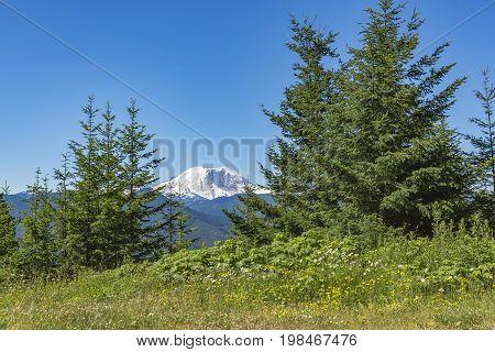 Mt. Rainier Washington State Park With Trees And Peaks