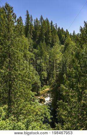 River Among Dense Trees In Washington