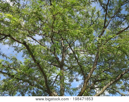 Beautiful shades of green leaves from trees in summer