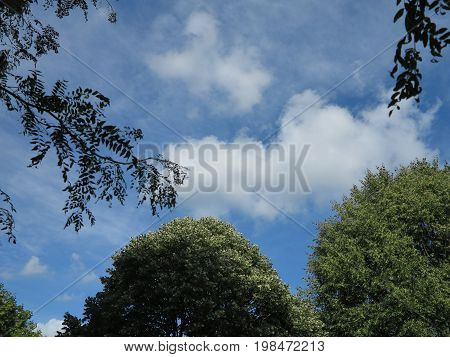 Trees in summer with bright blue sky and cloud formation