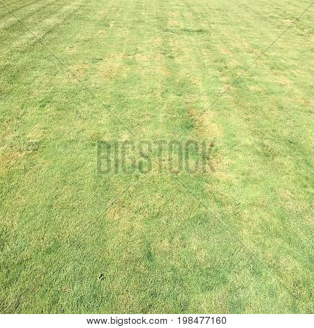 Grass. Green. Grass background. Natural green grass texture Natural green grass background for design with copy space for text or image. Green texture background.