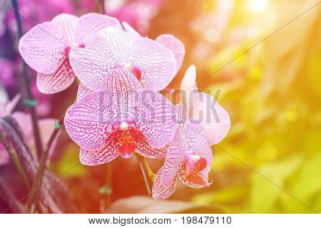 Orchid flower in garden at winter spring for postcard beauty. agriculture idea concept design. Orchids are export business products of Thailand that make a lot of money. Color effect.