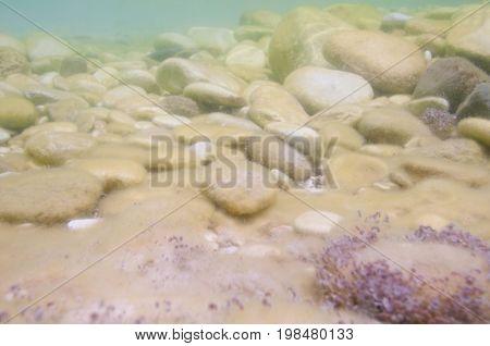Mediterranean Sea Floor, Color Image, Selective Focus, Horizontal Image