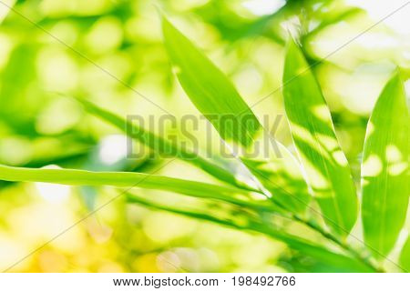 Close up nature of green leaf in park natural green bamboo plant using as a background