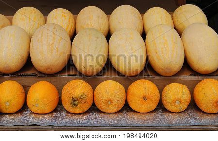 Melons are yellow, round and oval are on the counter